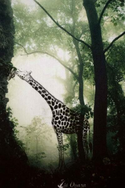 Aufnäher Giraffediebananenfrisst